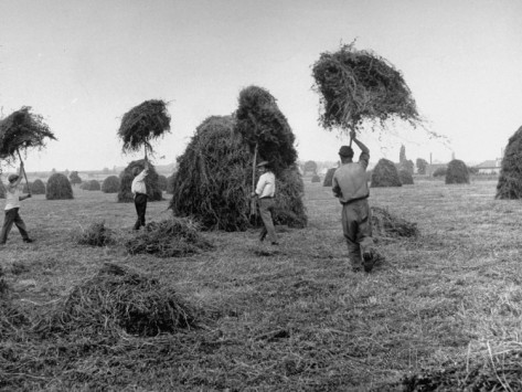 photo of farmers carrying hay on pitchforks